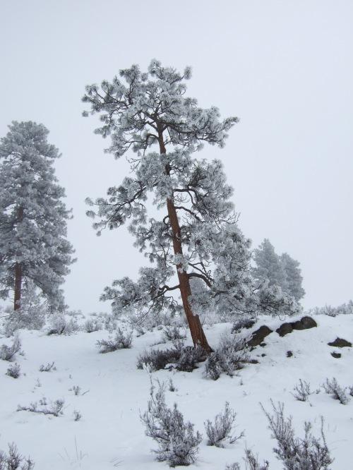 pearrygin-snowshoe-1