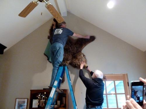 bear rug 1