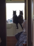 trailer cats
