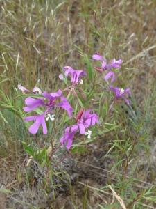 Zumwalt Prairie 1
